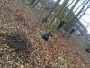 Nedtagning af rågereder i Odensen 2019. Dich Træpleje aps