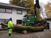 Fældning træfældning af asketræ med sygdommen asketoptørre samt honningsvamp i privat have i Højbjerg Aarhus Århus