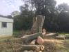 Træstamme fyldt med cement i Aarhus. Fældning af stort bøgetræ med råd kæmpeporesvamp i rødderne. Det store træ var til fare for sine omgivelser og skulle fældes hurtigst muligt. Træfældning Aarhus. Træfældning Østjylland. Fældning af vanskelige træer i Aarhus Østjylland. Dich Træpleje aps