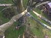 Træfældning af dødt træ Aarhus Østjylland. Nedfiring af effekter over tag ved fældning af træ i Aarhus Østjylland. Fældning af træ Aarhus.