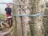Fældning af stort bøgetræ med råd kæmpeporesvamp i rødderne. Det store træ var til fare for sine omgivelser og skulle fældes hurtigst muligt. Træfældning Aarhus. Træfældning Østjylland. Fældning af vanskelige træer i Aarhus Østjylland. Dich Træpleje aps
