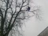 Forårs beskæring marts 2013 i snevejr