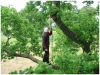 Steve efter footlock i egetræ
