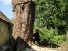 Træfældning. Dich Træpleje aps