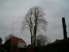 Kronereduktion på lindetræ. Dich Træpleje aps