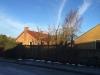 Opstart af knudebeskæring. 2015. Træbeskæring i Aarhus. ETW Certificeret.