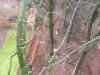 Nedtagning fjernelse af rågereder for Silkeborg kommune. Dich Træpleje aps. ETW certificeret. Træpleje Aarhus, Østjylland, Silkeborg