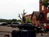 Restaurering af topkappet træ i Aarhus - Træet efter topkapning i år 2000