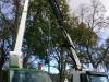Dich Træpleje aps. ETW certificeret træpleje i Aarhus.