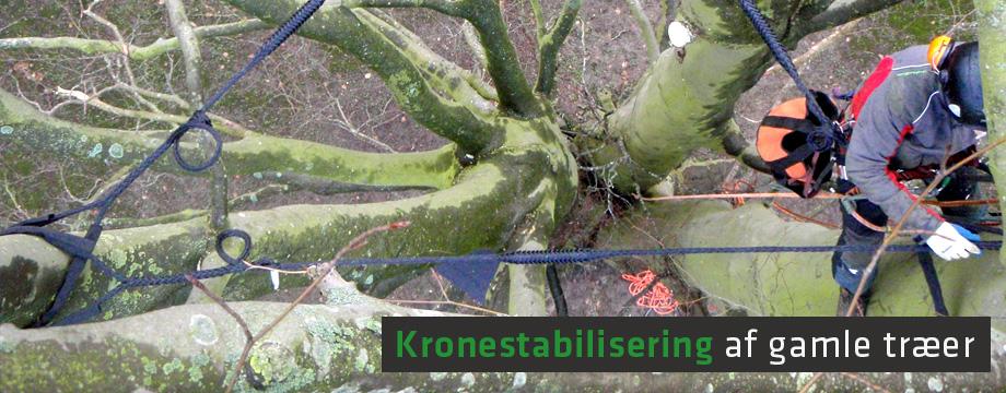 Kronestabilisering af gamle træer