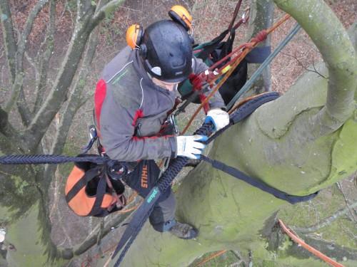 Montering af kronestabilisering i gammelt bøgetræ