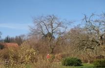 Reducering af bøgetræ