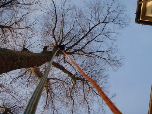 Sikkerhedsbeskæring kronepleje af gamle træer. Sikkerhed gamle træer. Træpleje af gamle træer. Bevar gamle træer. Veterantræ i Århus Aarhus Østjylland. Certificeret ETW træpleje i Aarhus. Dich Træpleje aps
