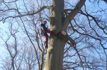 Topkapning af overstandere i skov