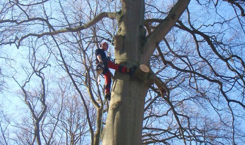 Topkapning af overstander i skov