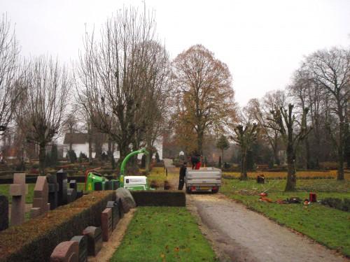 Knude beskæring af asketræer på kirkegård