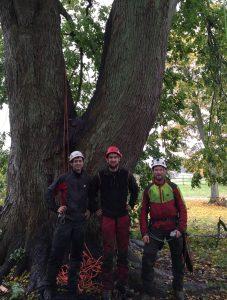 Beskæring af kæmpe stort lindetræ med Christian Birch