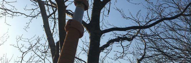 Sikker nedtagning af rågereder ved klatring. Træet tager ikke skade. Klatring er uden brug af klatresporer og der bliver (hvor det er nødvendigt) kun skåret helt små grene af træerne, for at kunne løsne rederne. Alt arbejde er naturligvis i overensstemmelse med Branchevejledning Erhvervsmæssig træklatring. Dich Træpleje aps